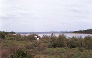 2002:  Saltmarsh and Mangrove around Springvale Drain