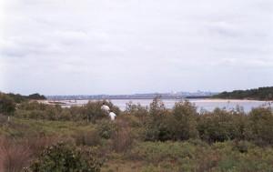 2002:  Saltmarsh and Mangrove around Springvale Drain